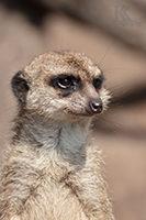Halle_Zoo_Dahliengarten_Gera_Beitragsbild