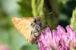 Austellung Augenblicke Altenburg Falter auf einer Blume Makroaufnahme