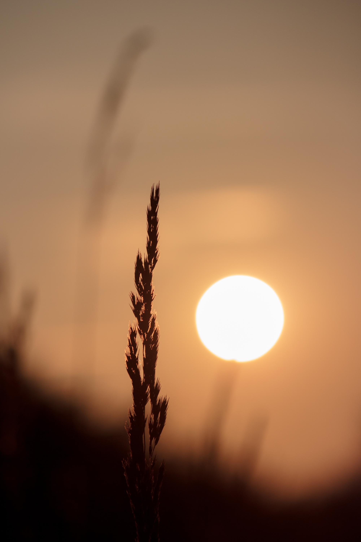 fotoaufnahme von gräsern im sonnenuntergang