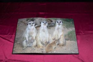 Saal Produkttest Fotobuch matt